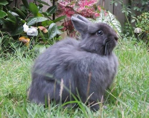 my daughter's bunny